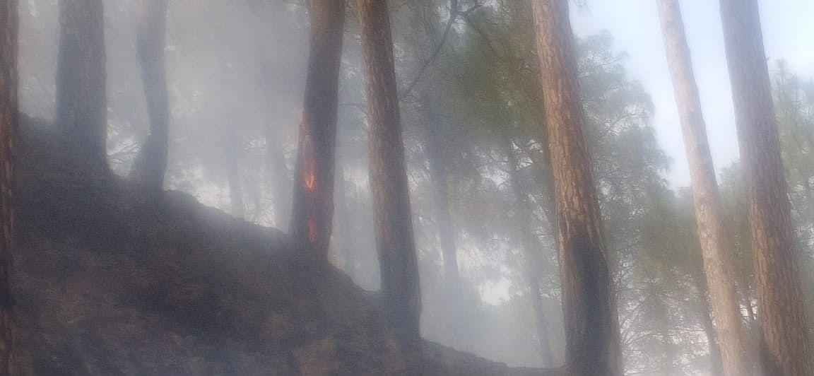 टौंस वन प्रभाग के जंगलों में फिर सुलगी आग