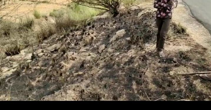 औरैया : अज्ञात कारणों से खेत में लगीं आग, गेंहू की फसल जलकर राख