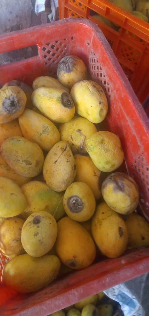 उज्जैन: जनता कर्फ्यू ने लगाया फल व्यापारियों को लाखों रूपये का फटका
