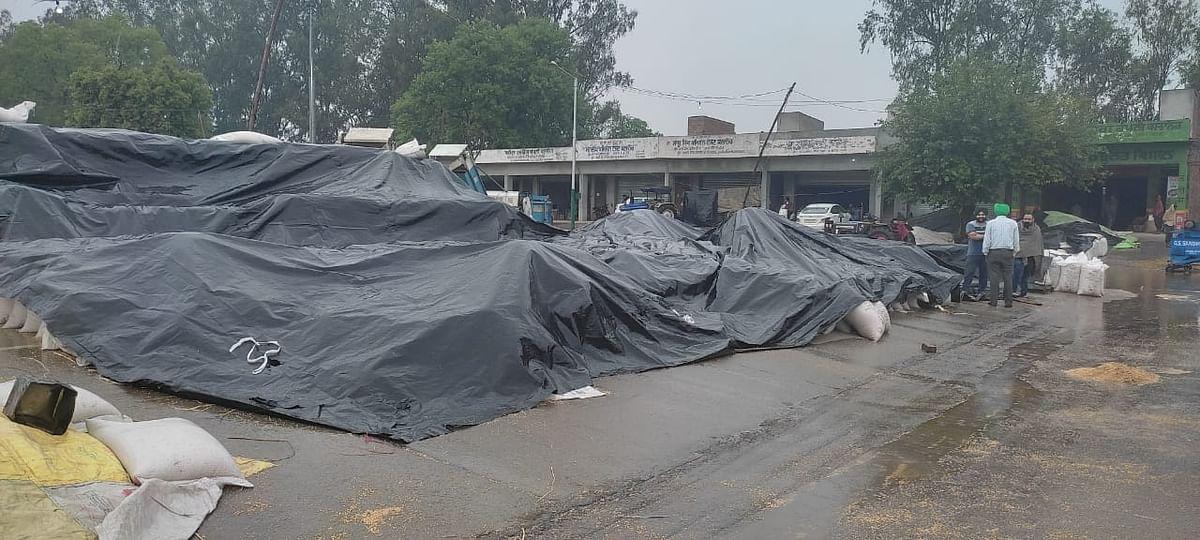 दाना मंडी गुरदासपुर में गेहूं के ढेर बारिश से बचाने के लिए तिरपाल से ढके दिखाई देते हैं।