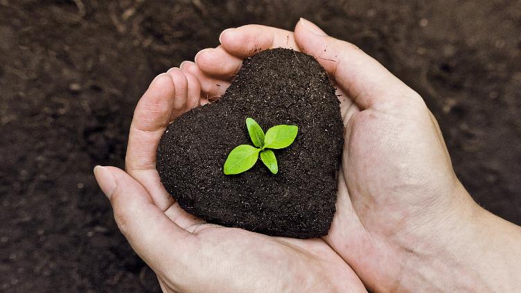 अगर आपके पेड़ या पौधे की हो गई है तबियत खराब तो अमृतसर के अस्पताल में होगा इनका इलाज