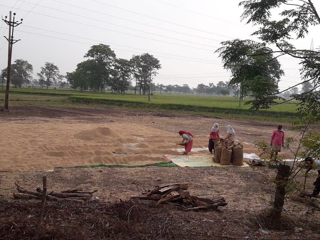 धमतरी : कृषि उपज मंडी बंद, धान बेचने किसानों की बढ़ी चिंता