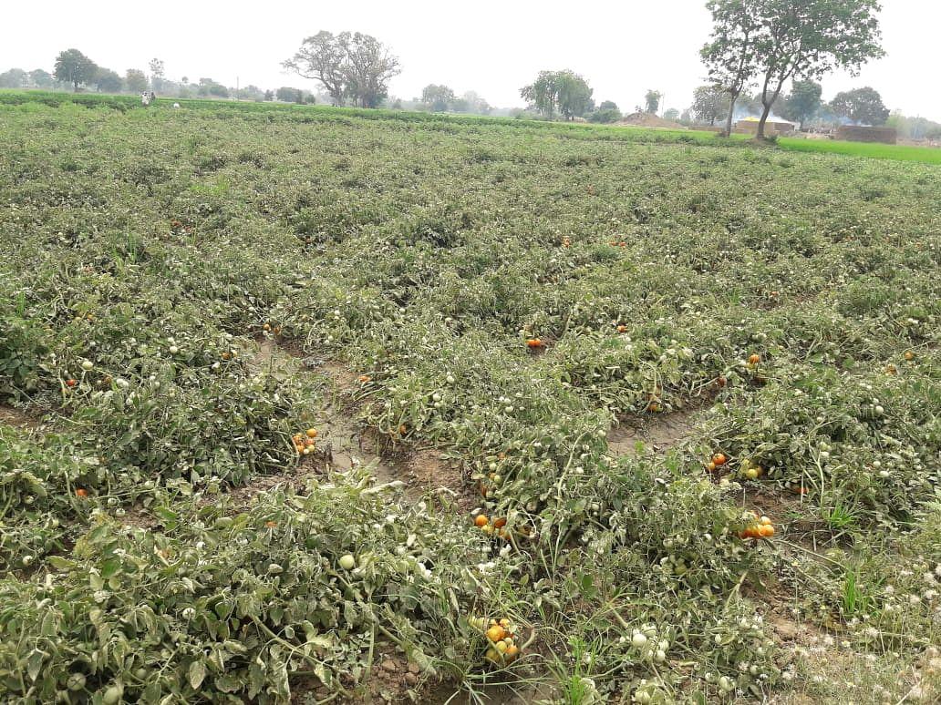 dhamtari-vegetable-market-closed-in-lockdown-farmers-worried-about-spoiling-vegetables