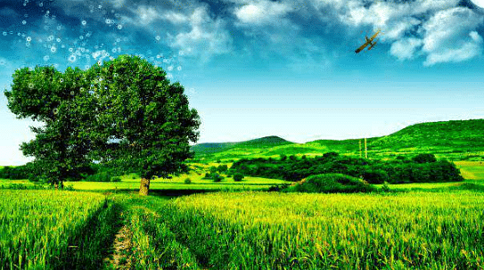 भोजपुर में जल,जीवन,हरियाली पर शुरू होगा कार्य