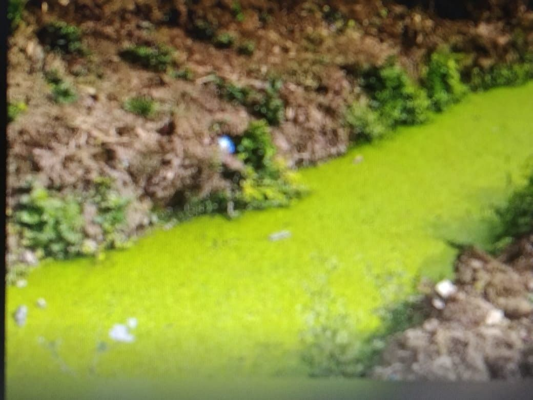 bemetra-dirty-water-filled-in-canal-lining-disturbed-by-resident-mosquitoes