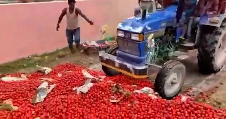 किसानों ने सड़को पर फेंका दर्ज़नों कैरेट टमाटर,वीडियो किया सोशल साइट्स पर वायरल