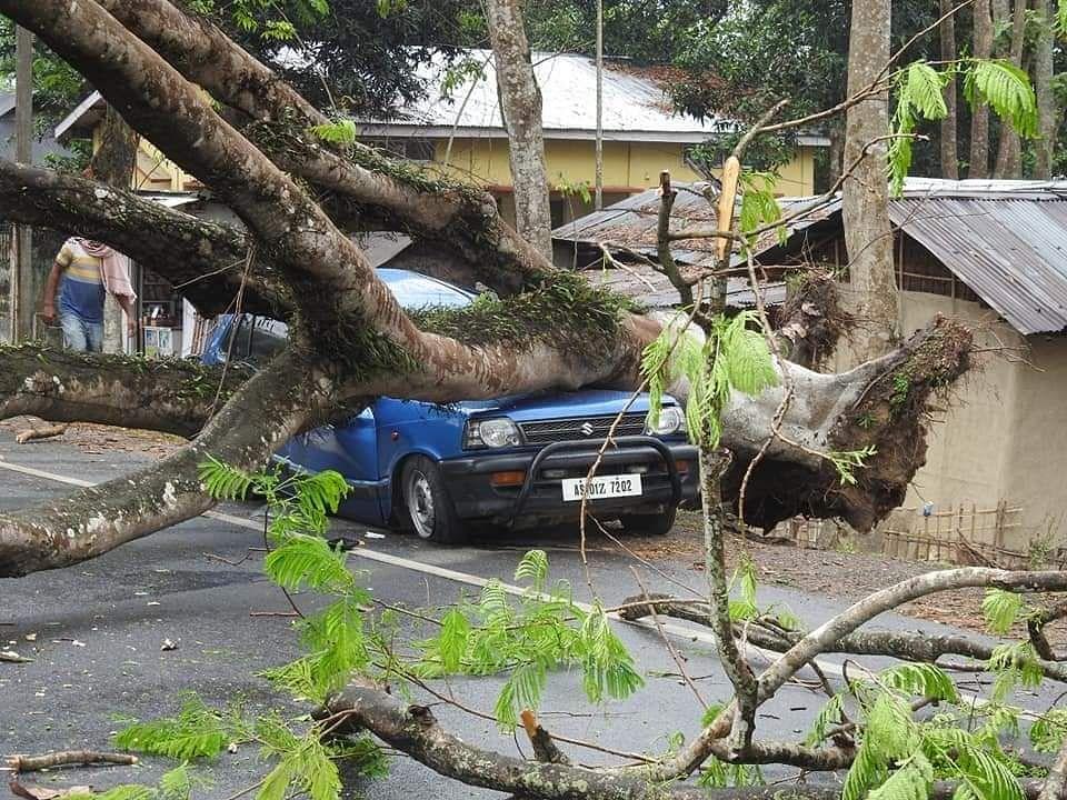 पेड़ गिरने से एक व्यक्ति की मौत