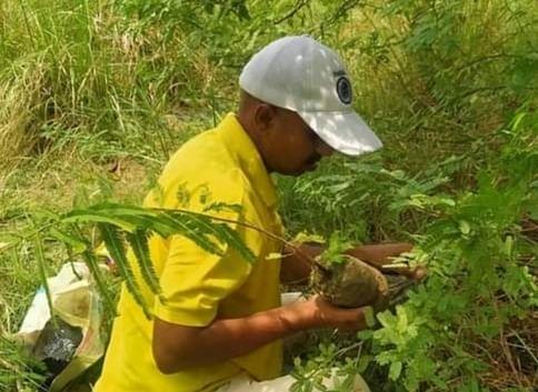 उप्र : बक्सवाहा के जंगल को बचाइए, हमें हीरा नहीं 'ऑक्सीजन' चाहिए