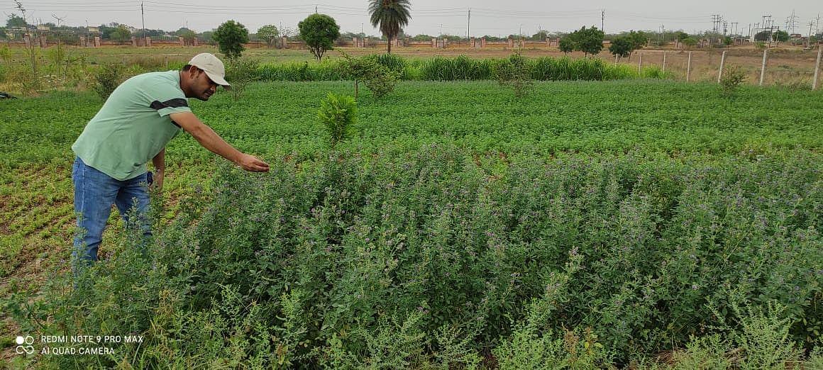 """बुन्देलखण्ड को अन्ना प्रथा से निजात दिला सकती है चारे की फसल """"लुसर्न"""" - डा. यू.एस. गौतम"""