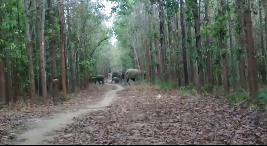 धमतरी : हाथियों के चिंघाड़, तेंदुए की दहाड़ और भालुओं की दौड़ से दहशत में क्षेत्रवासी
