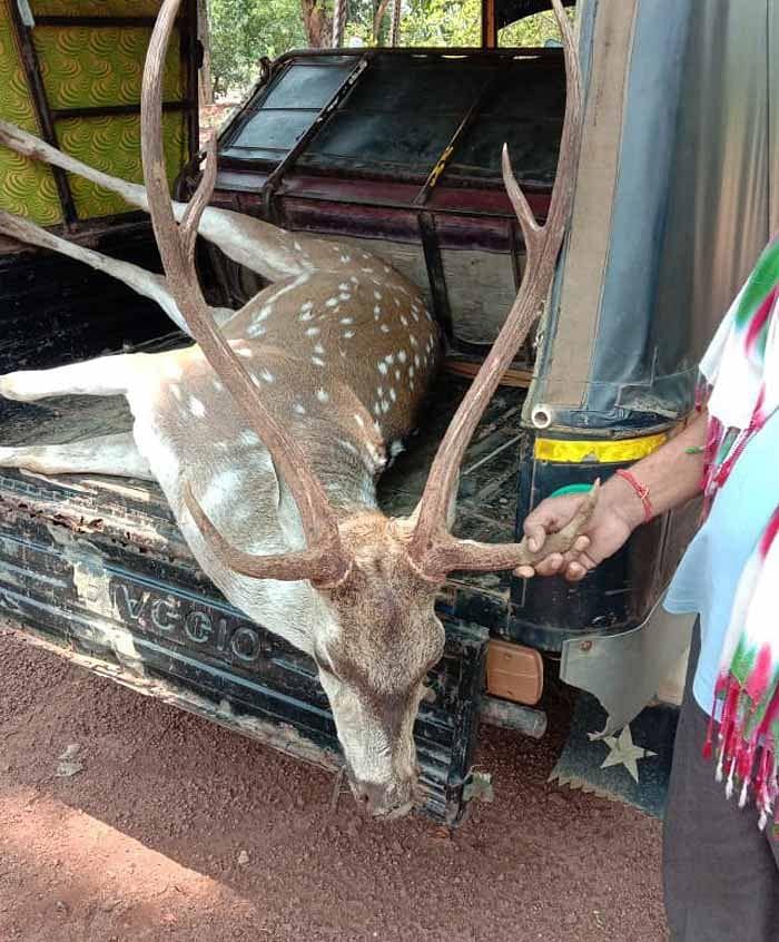 कांकेर : कापसी वन परिक्षेत्र के मायापुर में वन्य प्राणी मृत हिरण मिला