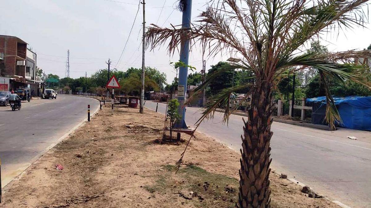 धर्म नगरी के सीतापुर-बेड़ीपुलिया मार्ग के डिवाइडर में लगे पेड़ सूखे