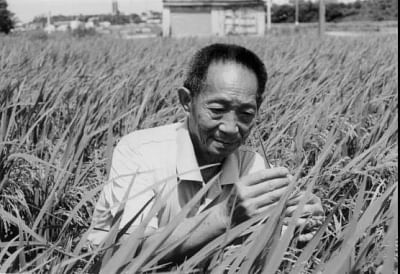 parent-of-chinese-hybrid-paddy-dies