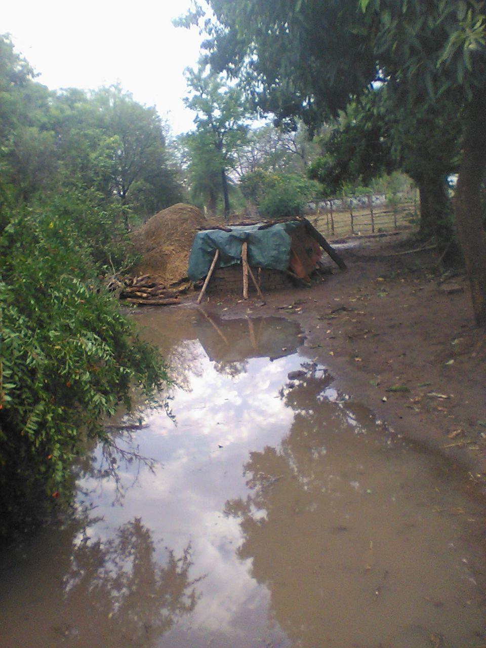 धमतरी: झमाझम बारिश के साथ गिरे ओले, बेमौसम बारिश से फसलों को भारी नुकसान