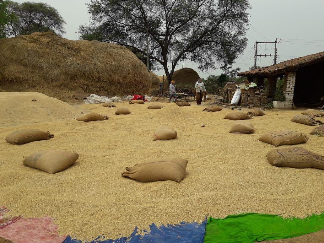 धमतरी : राइसमिलों में औने-पौने दाम पर रबी धान की खरीद, किसानों को भारी नुकसान