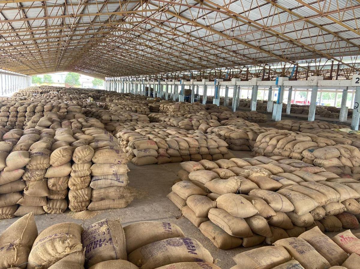 धमतरी:बीस  हजार कट्टा धान मंडी में, खरीदने नहीं पहुंचे व्यापारी