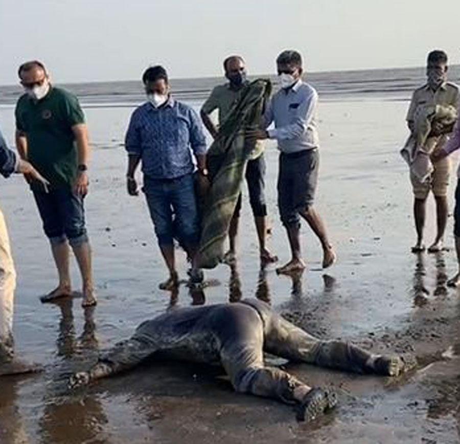 गुजरात : वलसाड तट के निकट से चार शव बरामद, बार्ज पी-305 के चालक दल के लापता सदस्य होने की आशंका