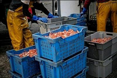 जापान का सीफूड उत्पादन रिकॉर्ड निचले स्तर पर