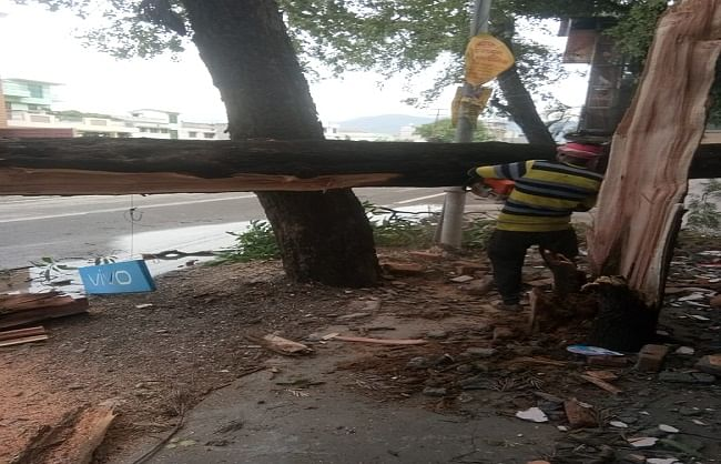 उत्तराखंड के कई इलाकों में तेज आंधी और बारिश से गिरे पेड़