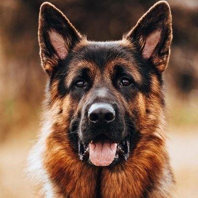 उत्तर प्रदेश के सीतापुर में कुत्ते की टांग तोड़ने वाला शख्स गिरफ्तार