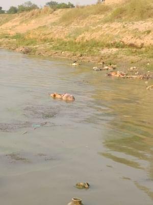 नदी में फेंके गए कोविड से संक्रमित शवों से मछली व्यापार प्रभावित