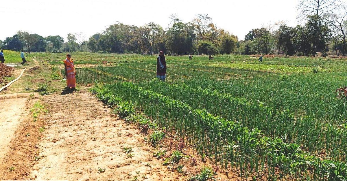 रायगढ़ : बाड़ी विकास से जुड़कर महिला समूह को मिल रही आर्थिक स्वावलंबन की राह