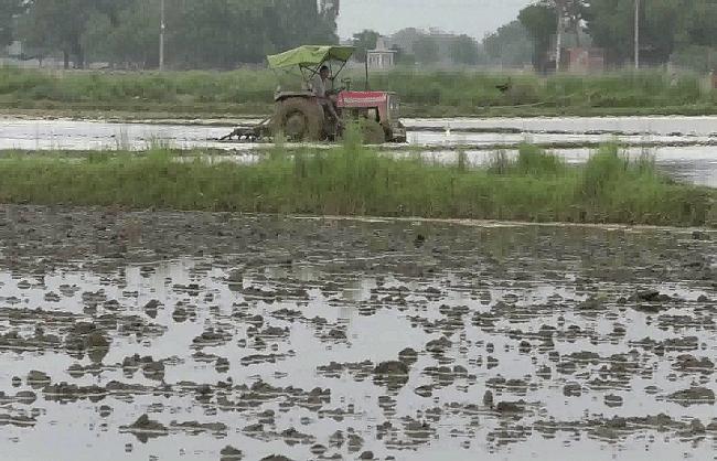 कौशाम्बी : बारिश से उरद व मूंग बोने वाल किसानों के सपने हुए चकनाचूर