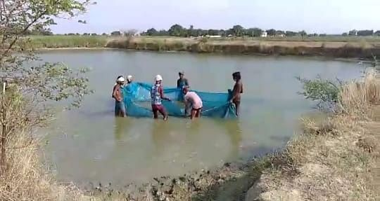 जल संरक्षण के साथ आय बढ़ाने के लिए मछली पालन का उपयुक्त समय है वर्षा ऋतु : डा. आनंद स्वरुप