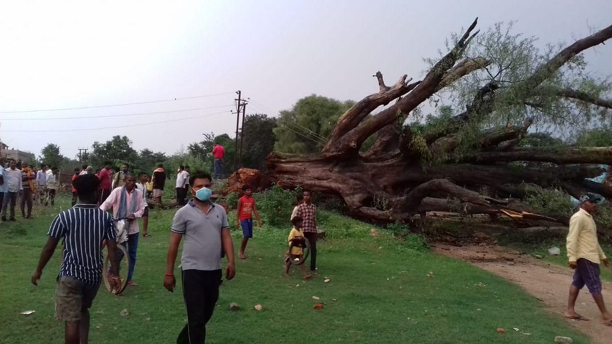 200 वर्ष पुराना इमली का पेड़ गिरा, आधा दर्जन घायल, कई घर भी हुए क्षतिग्रस्त