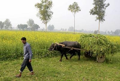 मप्र में सिंचाई रकबा 6 लाख हेक्टेयर बढ़ाने का लक्ष्य