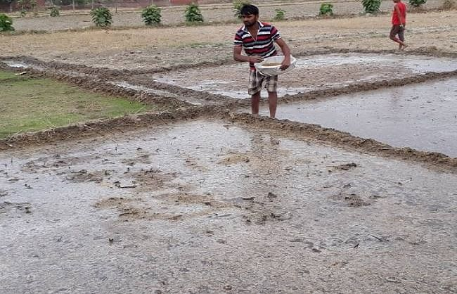 सिवान में चहल-पहल बढ़ी, खेतों में धान की नर्सरी डालने की तैयारी में जुटे किसान