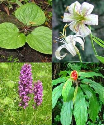 हिमाचल ने औषधीय पौधों की खेती पर दिया जोर