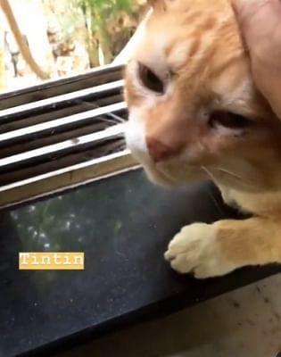 चंदन रॉय सान्याल ने अपनी पालतू बिल्ली टिनटिन की मौत पर शोक व्यक्त किया