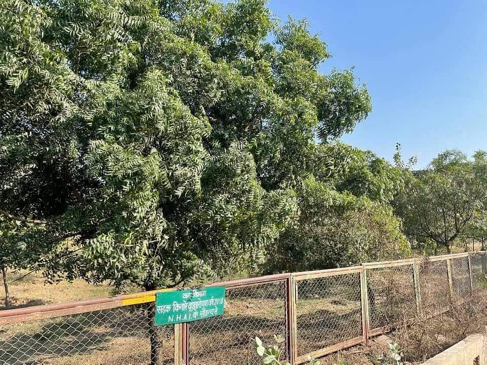 एनएचएआई के सहयोग से कराए जा रहे सड़क किनारे वृक्षारोपण कार्य की प्रगति की समीक्षा