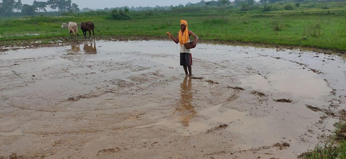 बारिश के बावजूद धान का बिचड़ा लेवा बिहन डाल रहे हैं किसान