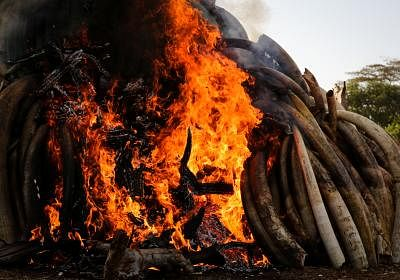 तंजानिया ने अवैध शिकार करने वाले 95 गिरोहों को नष्ट किया