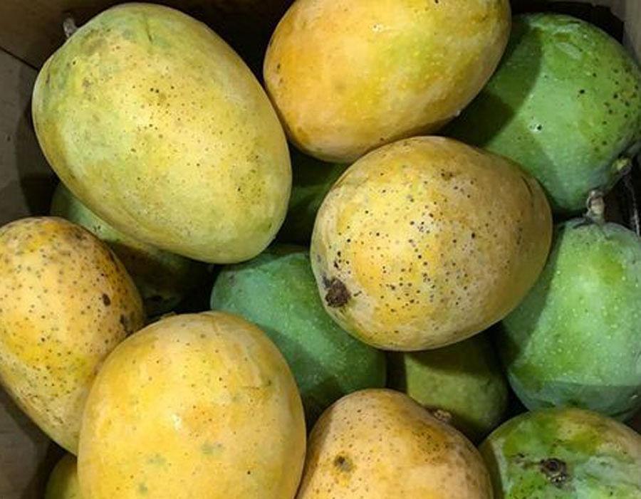 नवसारी की 'सोनपरी' आम ने मिठास में केसर को पीछे छोड़ा