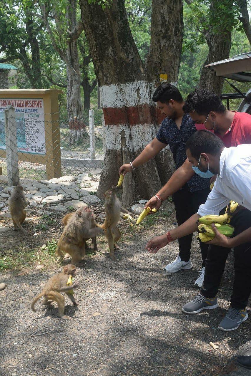 बजरंग दल के कार्यकर्ता बंदरों और गायों का रख रहे ख्याल