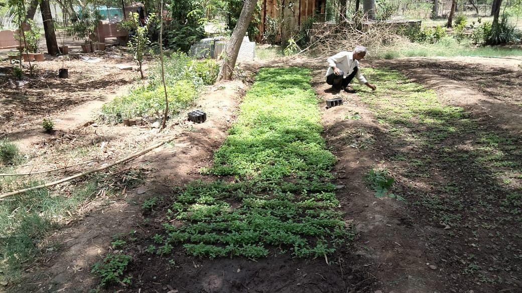 चित्तौड़गढ़ जिले के तीन लाख से अधिक परिवारों को होगा निशुल्क औषधिय पौधों का वितरण