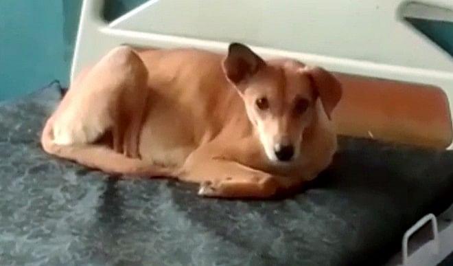 बेजुबान पर जुल्म! पड़ोसी के कुत्ते ने महिला को काटा, पति ने कुत्ते को गोली से उड़ाया
