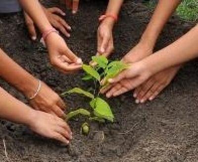 गांव में नव विवाहितों के लिए पेड़ लगाना हुआ अनिवार्य