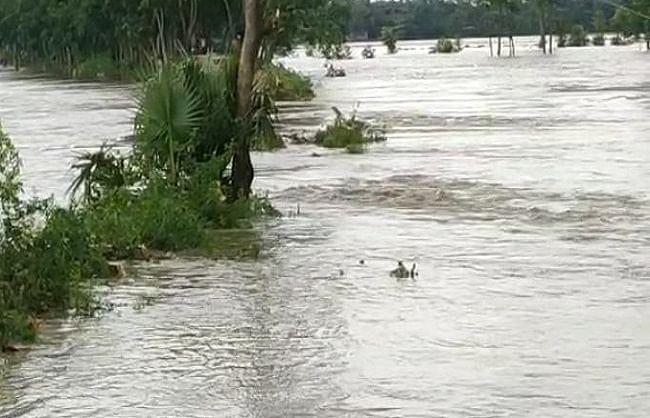 गुजरात, मप्र, बंगाल समेत कई राज्यों में बारिश से जनजीवन अस्त-व्यस्त