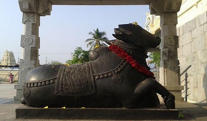 भगवान शिव के सम्मुख क्यों विराजते हैं नंदी महाराज?