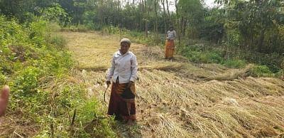 बंगाल में संथाल अपनी जड़ों में कर रहे वापसी, खेती में बटाएंगे हाथ