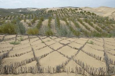 चीन वैश्विक मरुस्थलीकरण रोकथाम और नियंत्रण में देता है उपयोगी अनुभव
