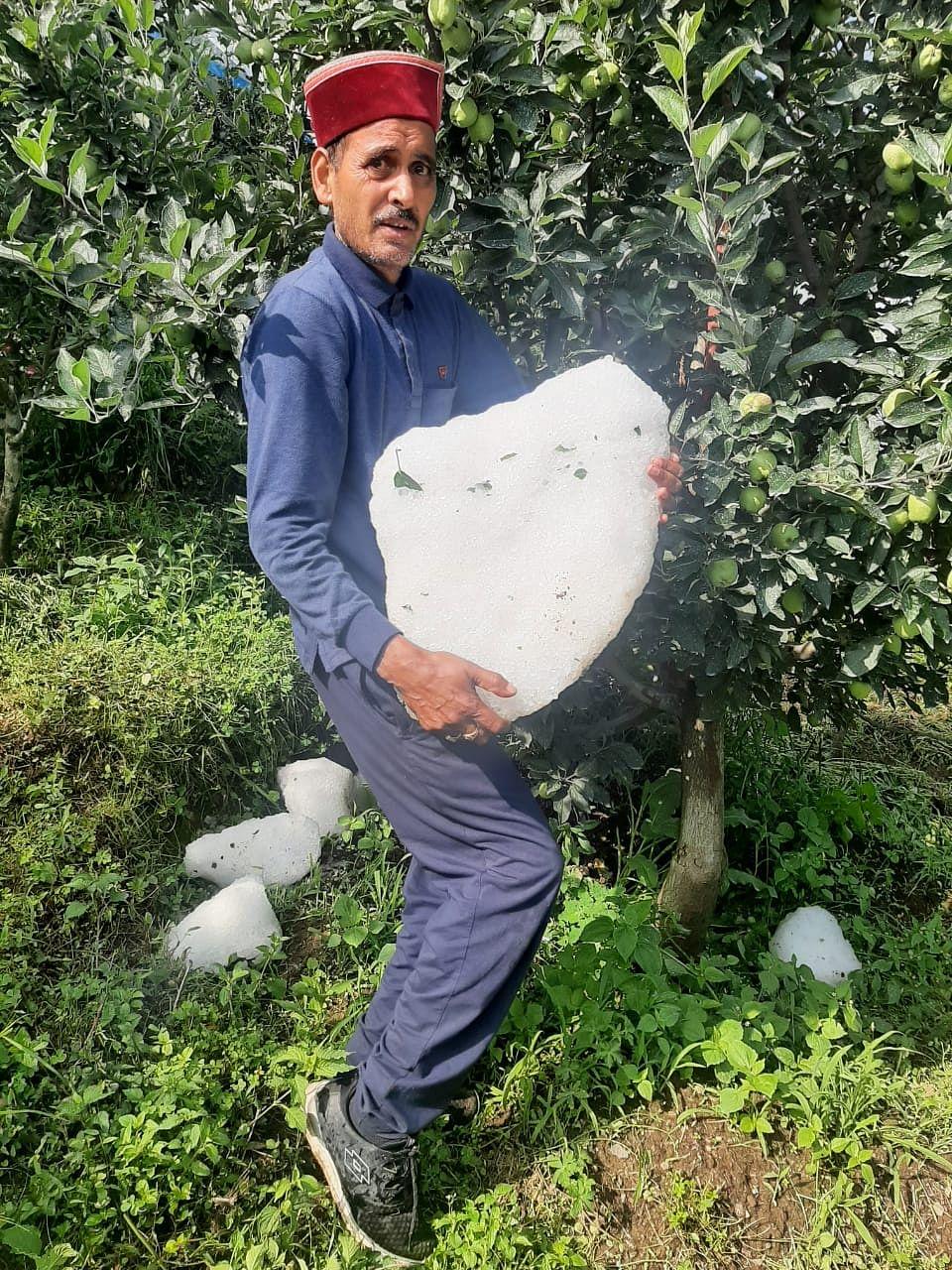 उत्तरकाशी की सिंगतुर पट्टी में ओलावृष्टि से भारी तबाही, सेब बागवानों में हाहाकार
