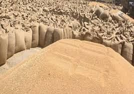 उप्र में अब तक 52.66 लाख मीट्रिक टन गेहूं की हुई खरीद