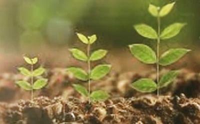 आईसीसी परियोजना के लिए वाराणसी में 73 पेड़ दूसरी जगह किये गये शिफ्ट