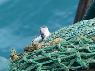 भोपाल में मछली मारने और विक्रय पर 15 अगस्त तक प्रतिबंध