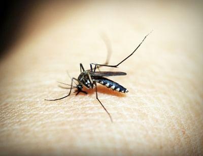 दिल्ली में 3 जुलाई तक डेंगू के 36, मलेरिया के 11 मामले सामने आए